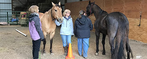 Creating-Pathway-Farms–Equine-Assisted-Learning-01
