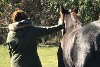 Creating-Pathway-Farms-Equine-Facilitated-Therapy-page-01