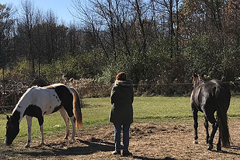Creating-Pathway-Farms-Equine-Facilitated-Therapy-page-21
