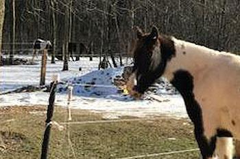 Creating-Pathways-Farm-Our-Horses-Lexi