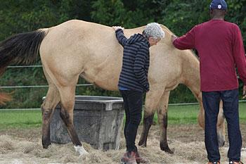 creating-pathways-farm-our-horses-diva