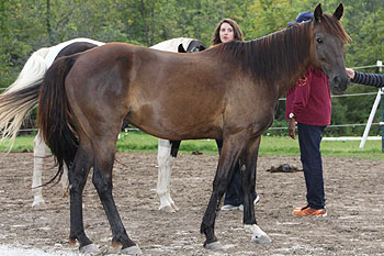 creating-pathways-farm-our-horses-rizzo